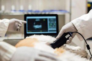 Veterinary PoC Diagnostics Market