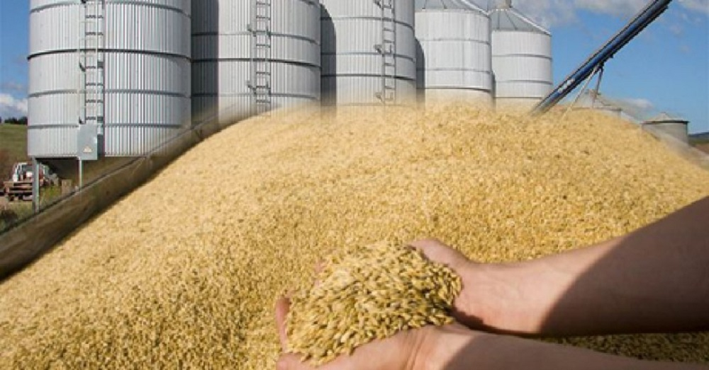 wheat export price