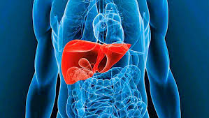 Liver Failure Therapeutics Market