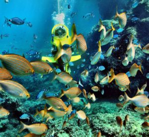 best padi certified scuba diving center in kerala