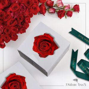 Find premium Gifts at TINAS
